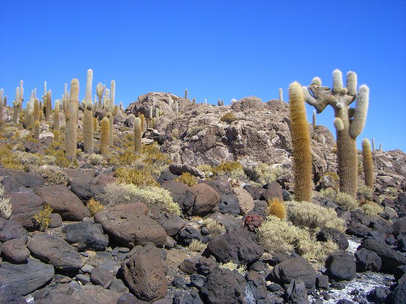 Остров Рыбы, гигантские кактусы