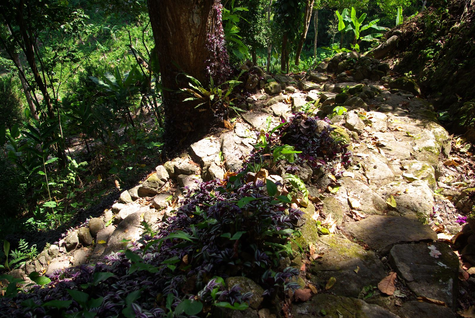 Uraca, Hacienda Picaflor