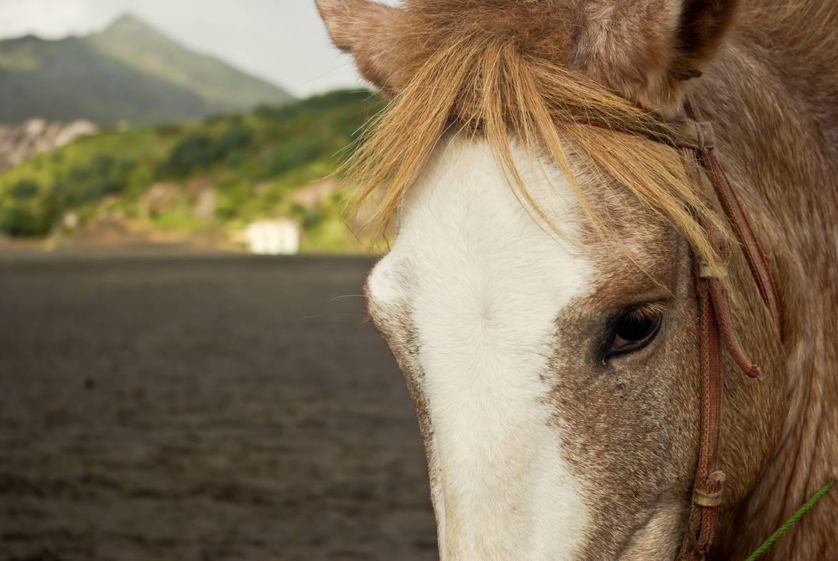 Лошади около вулкана Бромо